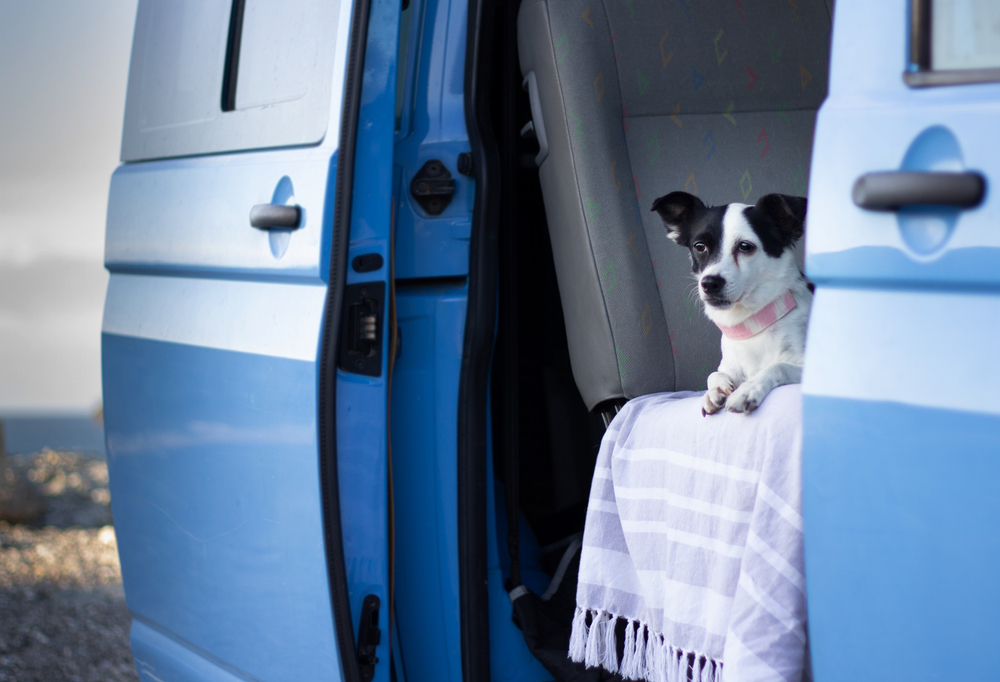 Taking your dog on a campervan holiday
